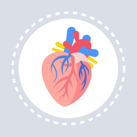 anatomical heart icon healthcare medical service logo medicine and health symbol concept flat vector illustration