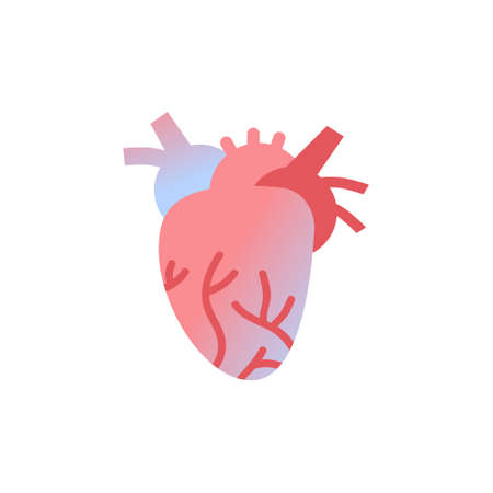 anatomical heart icon human body organ anatomy healthcare medical concept white background vector illustration