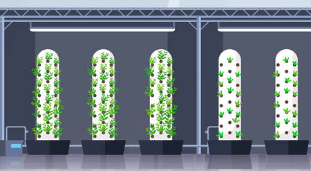 modern organic hydroponic vertical farm interior agriculture smart farming system concept green plants growing industry horizontal flat vector illustration