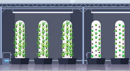 moderno, orgánico, hidropónico, vertical, granja, interior, agricultura, inteligente, sistema de cultivo, concepto, plantas verdes, creciente, industria, horizontal, plano, vector, ilustración