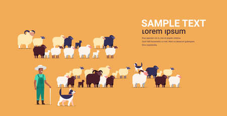 shepherd with stick and dogs herding flock of white black sheeps african american male farmer breeding sheep wool farm concept farmland flat full length copy space horizontal vector illustration