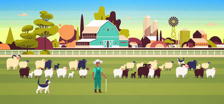shepherd with stick and dogs herding flock of white black sheeps african american male farmer breeding sheep wool farm concept field farmland countryside landscape flat full length horizontal vector illustration
