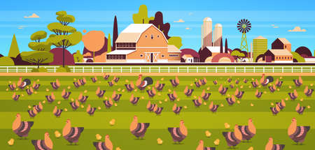 chicken and rooster free range feeding time farming breeding hed for food poultry farm concept field farmland countryside landscape flat horizontal vector illustration