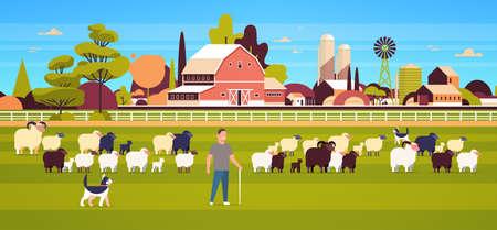 shepherd with stick and dogs herding flock of white black sheeps male farmer breeding sheep wool farm concept field farmland countryside landscape flat full length horizontal vector illustration 일러스트