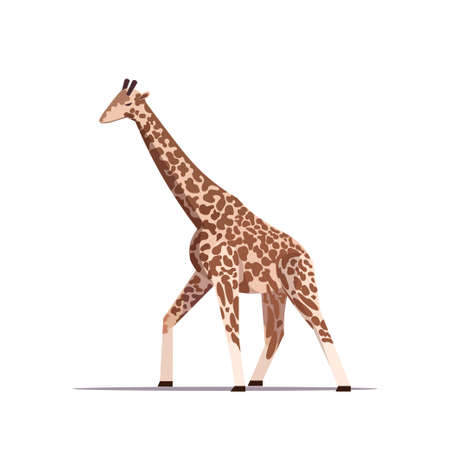cartoon giraffe long-necked african animal standing pose white background full length flat vector illustration Иллюстрация