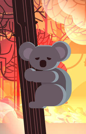 endangered koala bear on tree animals dying in wildfire bush fire development dry woods burning trees natural disaster concept intense orange flames vertical vector illustration