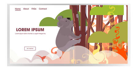 koala sitting on tree forest fires in australia animals dying in wildfire bushfire natural disaster concept intense orange flames horizontal copy space vector illustration