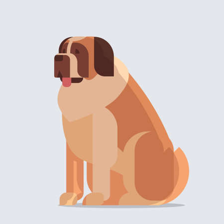 Short-haired saint bernard dog icon furry human friend home animal concept full length vector illustration