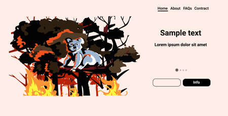 koala bear sitting on tree forest fires in australia animals dying in wildfire bushfire natural disaster concept intense orange flames horizontal copy space vector illustration