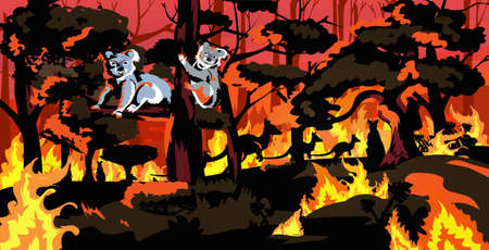 koala bears sitting on tree forest fires in australia animals dying in wildfire bushfire natural disaster concept intense orange flames horizontal vector illustration