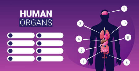 human body structure infographic poster with male internal organs icons anatomy system board portrait horizontal vector illustration