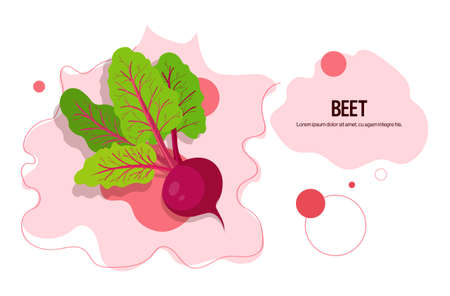 fresh beet sticker tasty vegetable icon healthy food concept horizontal copy space vector illustration