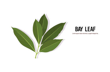 realistic bay leaf twig tasty fresh herb green leaves healthy food concept horizontal copy space vector illustration