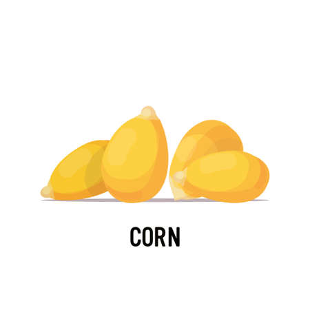 corn beans organic healthy vegetarian food on white background vector illustration