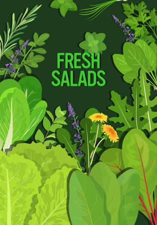 mix of different fresh salads leaves healthy nutrition vegetarian food concept vertical vector illustration