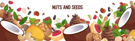 set different nuts and seeds composition healthy vegetarian food concept horizontal vector illustration