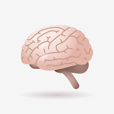 brain icon human internal organ biology anatomy healthcare concept flat vector illustration