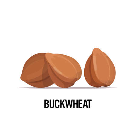 buckwheat grains organic healthy vegetarian food on white background vector illustration