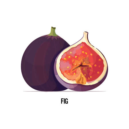 fresh juicy fig icon tasty ripe fruit berry isolated on white background healthy food concept vector illustration