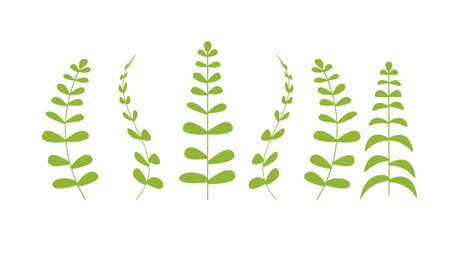 botanical floral set green plants branches with leaves realistic herbs collection horizontal vector illustration