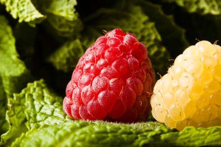 jam tarts: Fresh raspberries on a journey through an enchanted forrest of lush green mint.