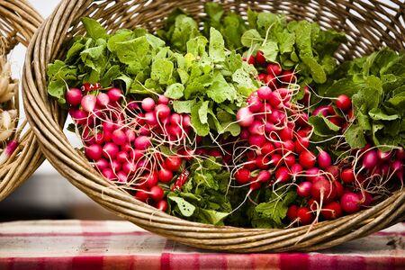 raddish: Fresh organic radishes in a basket at the farmers market.