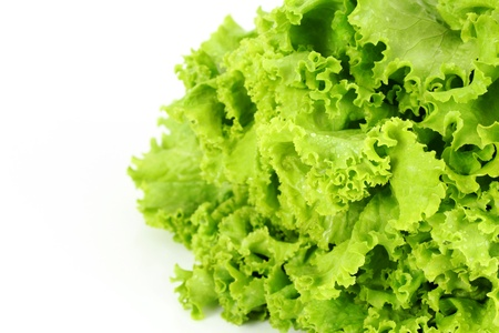agricultura: lechuga Stock Photo