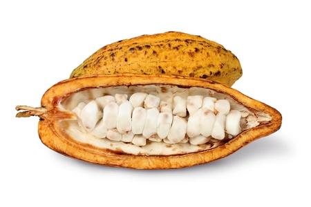 cocoa fruit: cocoa Stock Photo