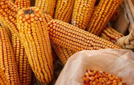 ear corn: ma�z o�do seco en puesto de mercado Foto de archivo
