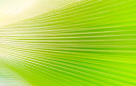 abstract green palm tree leaf blurred background Stock fotó