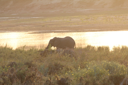 Elephant At Sunset photo