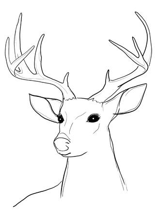 deer b w Stock Photo - 14981413