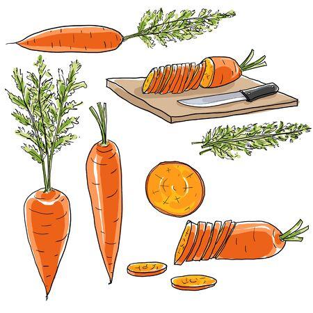 carrot Vegetable set of  art hand draw illustration