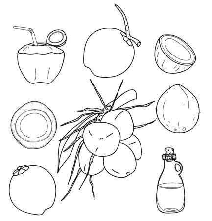 vector Coconut hand drawn vector set line art Vegetable illustration drawing.