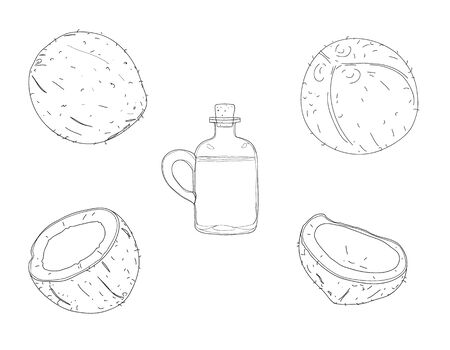 coconut oil raw set hand drawn vector elements cute line art painting  illustration