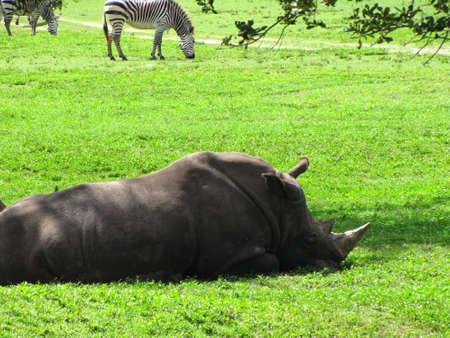 Wild Life Safari photo