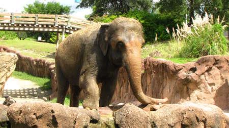 Elephant Showing Off photo