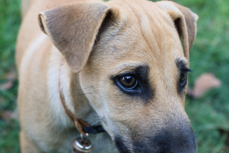 Dog Depression Stock Photo