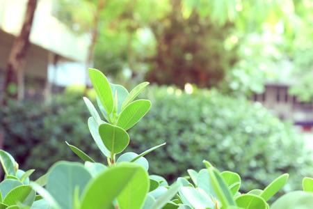 macro film: Top leaves weakens