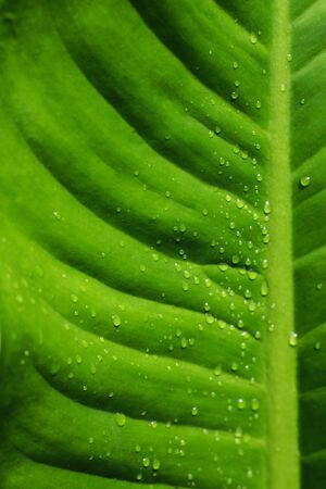 forestation: Water drops on green leaf