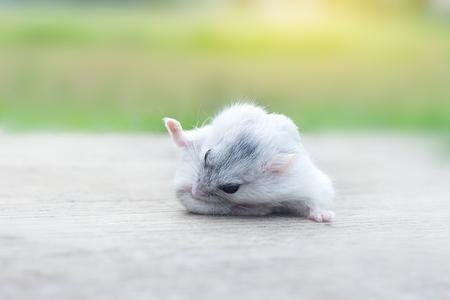 Hamster winterwit schoonmaakhaar