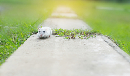 Hamster winter white run on cement
