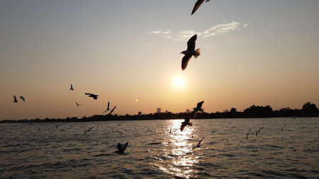 Pigeons are flying for food On the Chao Phraya River When the sun is setting