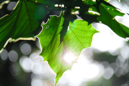 Sun shining through hole in a green leaf with a silver outline