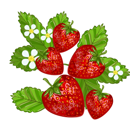 nutrient: Strawberries with leaves sweet freshness healthy berry food. Isolated on white strawberry delicious health dessert. Fresh fruit red juicy strawberry nutrient refreshment organic food.