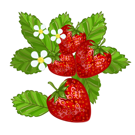 refreshment: Strawberries with leaves sweet freshness healthy berry food. Isolated on white strawberry delicious health dessert. Fresh fruit red juicy strawberry nutrient refreshment organic food.