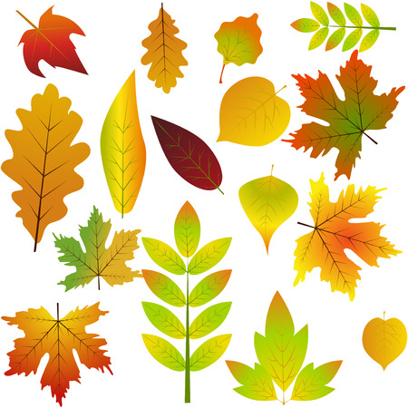 autumn leaves set simple nature leaf cartoon flat style vector rh 123rf com fall leaf cartoon drawing fall leaves cartoon pictures