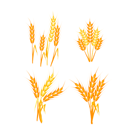 Wheat ears or rice icons set. Agricultural wheat spikelets symbols isolated on white background. Organic farm agriculture crop seed bread packaging or beer label. Vector wheat spikelets.
