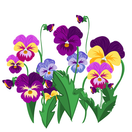 Set of pansy flowers violet bloom garden plant vector illustration.