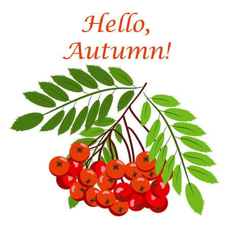 Rowan bunch berries red ripe leaf tree autumn season natural fruit illustration. Illustration